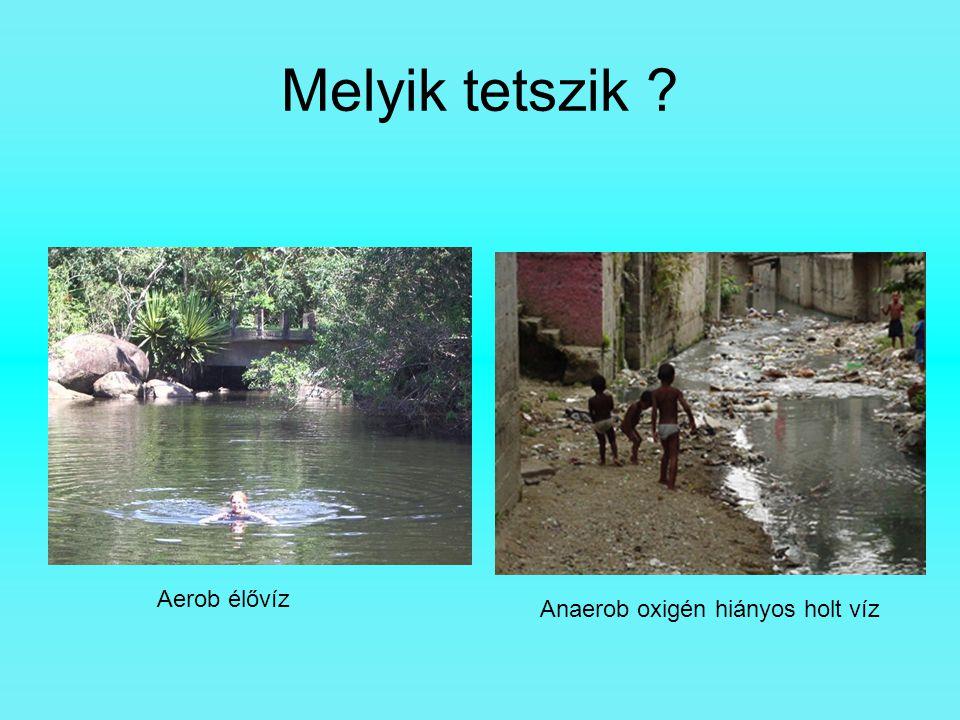 Melyik tetszik ? Aerob élővíz Anaerob oxigén hiányos holt víz