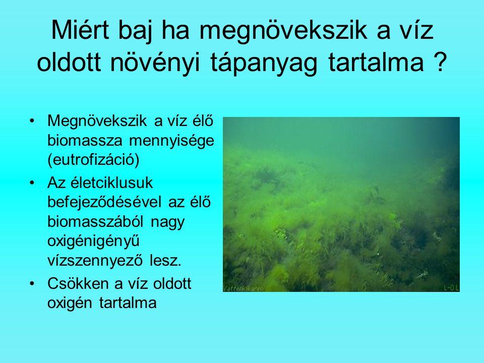 Miért baj ha megnövekszik a víz oldott növényi tápanyag tartalma ? Megnövekszik a víz élő biomassza mennyisége (eutrofizáció) Az életciklusuk befejező