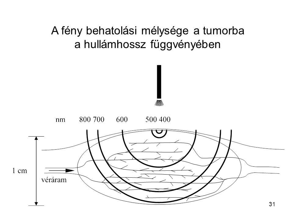 31 A fény behatolási mélysége a tumorba a hullámhossz függvényében