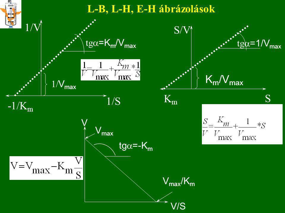 V=(V max /K S )*S 1.rendû tartomány 0. rendű tartomány V max = k 2 E O V S K m ; K S DISZKUSSZIÓ S  Ks Ha S  Ks derékszögű hiperbola látszólagos e