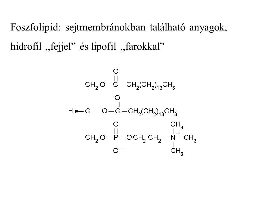 """Foszfolipid: sejtmembránokban található anyagok, hidrofil """"fejjel"""" és lipofil """"farokkal"""""""