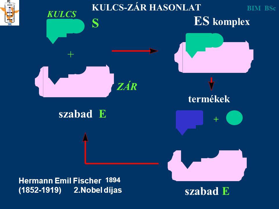 S szabad E + ES komplex szabad E + termékek KULCS ZÁR KULCS-ZÁR HASONLAT Hermann Emil Fischer (1852-1919) 2.Nobel díjas 1894 BIM BSc