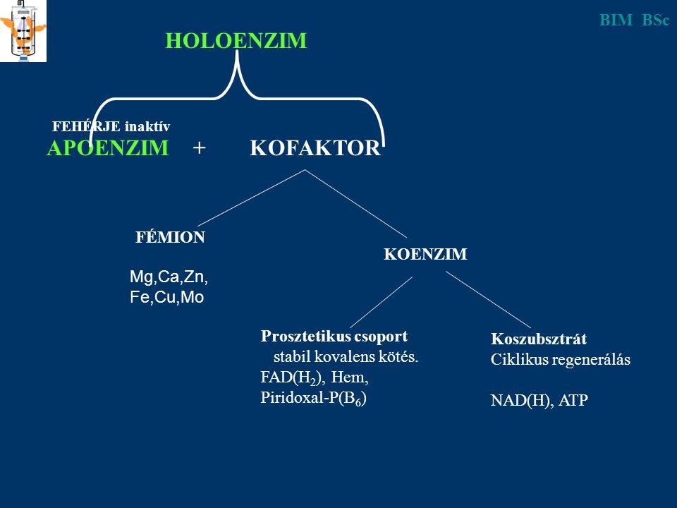 APOENZIM + KOFAKTOR HOLOENZIM FEHÉRJE inaktív FÉMION Mg,Ca,Zn, Fe,Cu,Mo KOENZIM Prosztetikus csoport stabil kovalens kötés. FAD(H 2 ), Hem, Piridoxal-