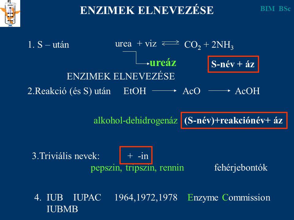 ENZIMEK ELNEVEZÉSE 1. S – után urea + viz CO 2 + 2NH 3 ureáz 2.Reakció (és S) után EtOH AcO AcOH alkohol-dehidrogenáz S-név + áz (S-név)+reakciónév+ á