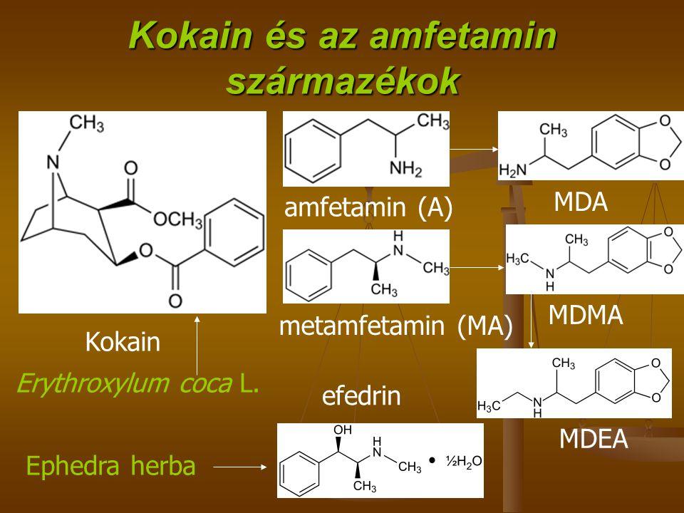 Kokain és az amfetamin származékok Erythroxylum coca L.