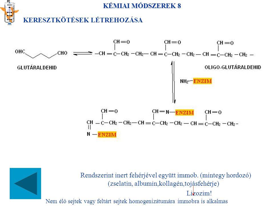 KÉMIAI MÓDSZEREK 8 KERESZTKÖTÉSEK LÉTREHOZÁSA Rendszerint inert fehérjével együtt immob.