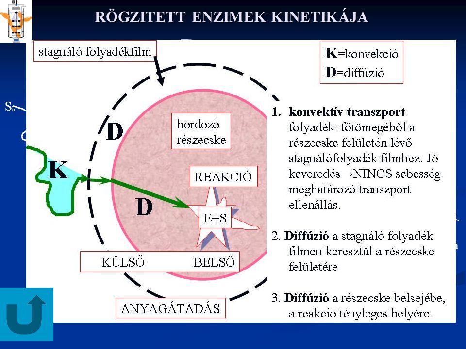RÖGZITETT ENZIMEK KINETIKÁJA stagnáló folyadékfilm SoSo KÜLSŐ BELSŐ ANYAGÁTADÁS REAKCIÓ hordozó részecske E+S D D K K=konvekció D=diffúzió 1.konvektív transzport folyadék fõtömegéből a rögz.