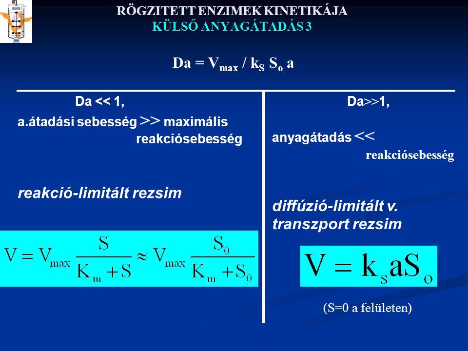 RÖGZITETT ENZIMEK KINETIKÁJA KÜLSŐ ANYAGÁTADÁS 3 Da << 1, a.átadási sebesség >> maximális reakciósebesség reakció-limitált rezsim Da >> 1, anyagátadás << reakciósebesség diffúzió-limitált v.