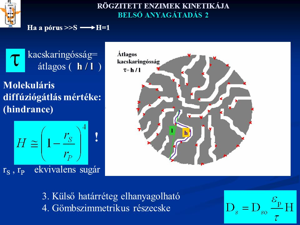 RÖGZITETT ENZIMEK KINETIKÁJA BELSŐ ANYAGÁTADÁS 2 kacskaringósság= h / l átlagos ( h / l ) l r S, r P ekvivalens sugár Molekuláris diffúziógátlás mértéke: (hindrance) 3.