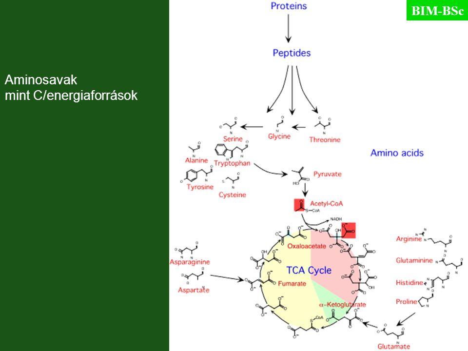 Aminosavak mint C/energiaforrások BIM-BSc