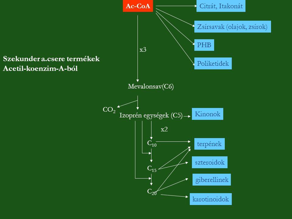 Ac-CoACitrát, Itakonát Zsírsavak (olajok, zsírok) PHB Poliketidek Mevalonsav(C6) Izoprén egységek (C5) CO 2 x3 C 10 C 15 C 20 x2 terpének szteroidok g