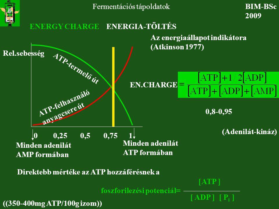 BIM-BSc 2009 Fermentációs tápoldatok ENERGY CHARGE ENERGIA-TÖLTÉS ATP-termelő út ATP-felhasználó anyagcsere út Rel.sebesség EN.CHARGE Az energiaállapo