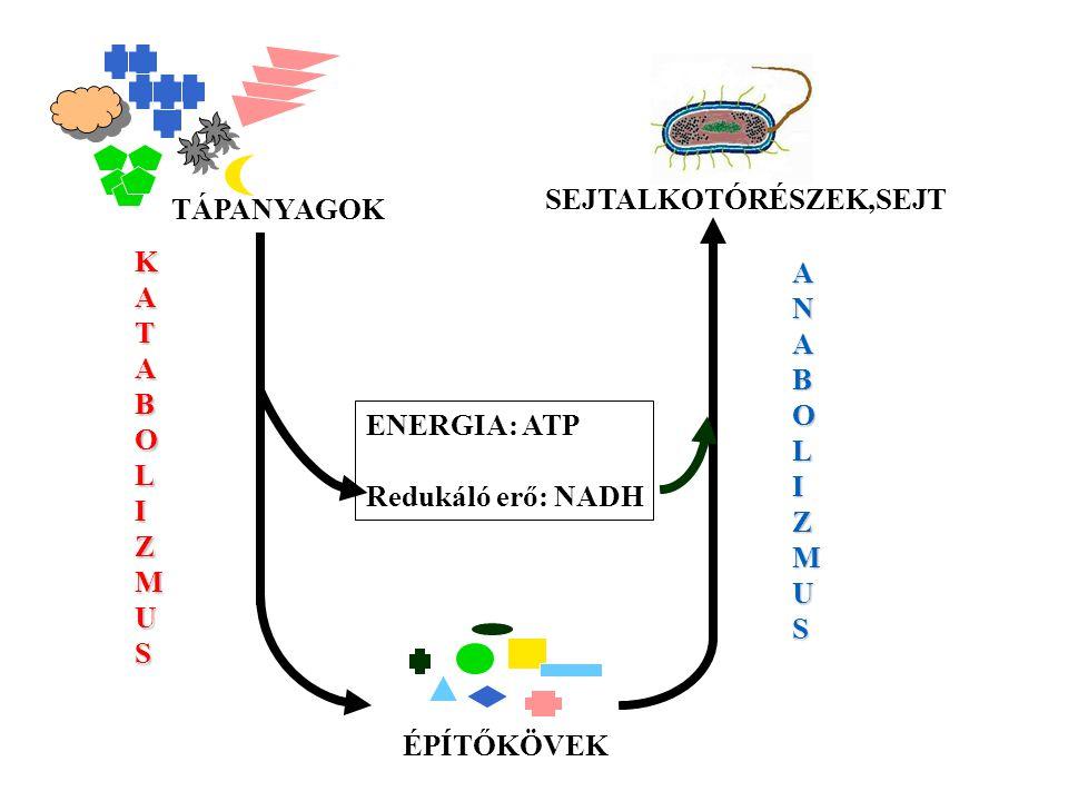 Oxidált NAD + Redukált NADH