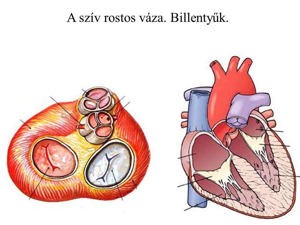 A szív rostos váza. Billentyűk.