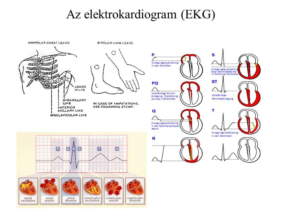 Az elektrokardiogram (EKG)