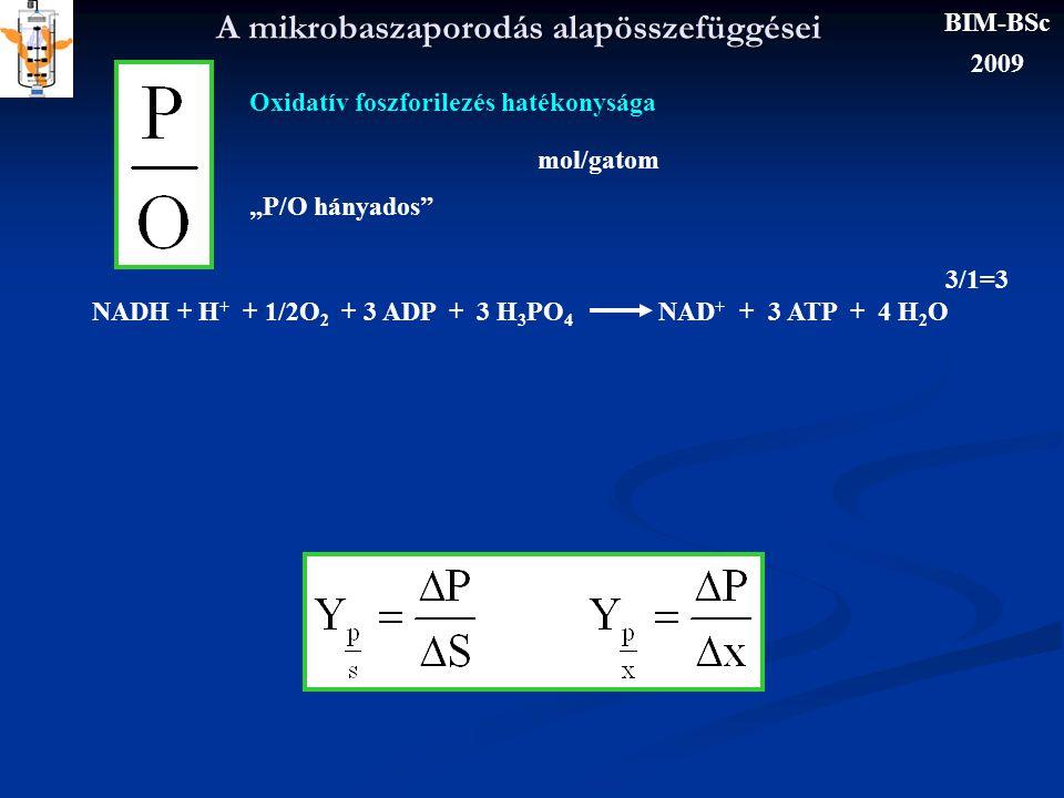"""A mikrobaszaporodás alapösszefüggései Oxidatív foszforilezés hatékonysága """"P/O hányados"""" mol/gatom NADH + H + + 1/2O 2 + 3 ADP + 3 H 3 PO 4 NAD + + 3"""