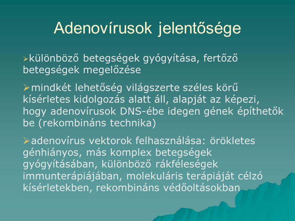 Adenovírusok jelentősége  különböző betegségek gyógyítása, fertőző betegségek megelőzése  mindkét lehetőség világszerte széles körű kísérletes kidolgozás alatt áll, alapját az képezi, hogy adenovírusok DNS-ébe idegen gének építhetők be (rekombináns technika)  adenovírus vektorok felhasználása: örökletes génhiányos, más komplex betegségek gyógyításában, különböző rákféleségek immunterápiájában, molekuláris terápiáját célzó kísérletekben, rekombináns védőoltásokban
