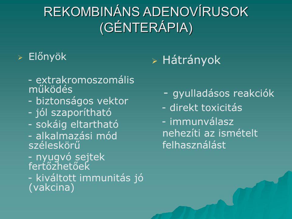 REKOMBINÁNS ADENOVÍRUSOK (GÉNTERÁPIA)   Előnyök - extrakromoszomális működés - biztonságos vektor - jól szaporítható - sokáig eltartható - alkalmazási mód széleskörű - nyugvó sejtek fertőzhetőek - kiváltott immunitás jó (vakcina)   Hátrányok - gyulladásos reakciók - direkt toxicitás - immunválasz nehezíti az ismételt felhasználást
