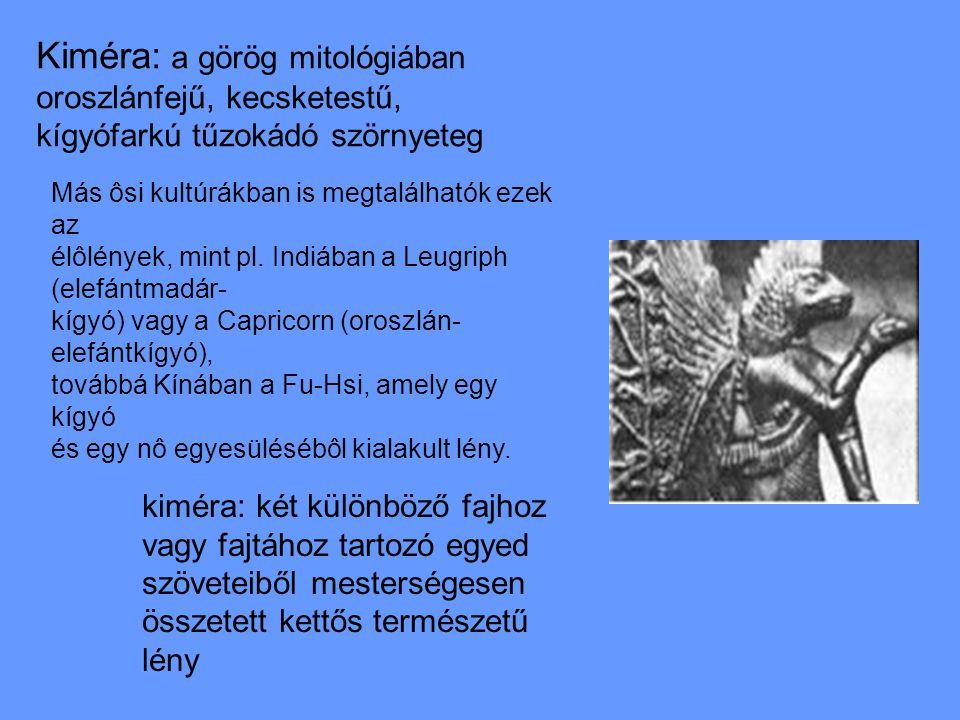 Kiméra: a görög mitológiában oroszlánfejű, kecsketestű, kígyófarkú tűzokádó szörnyeteg kiméra: két különböző fajhoz vagy fajtához tartozó egyed szöveteiből mesterségesen összetett kettős természetű lény Más ôsi kultúrákban is megtalálhatók ezek az élôlények, mint pl.