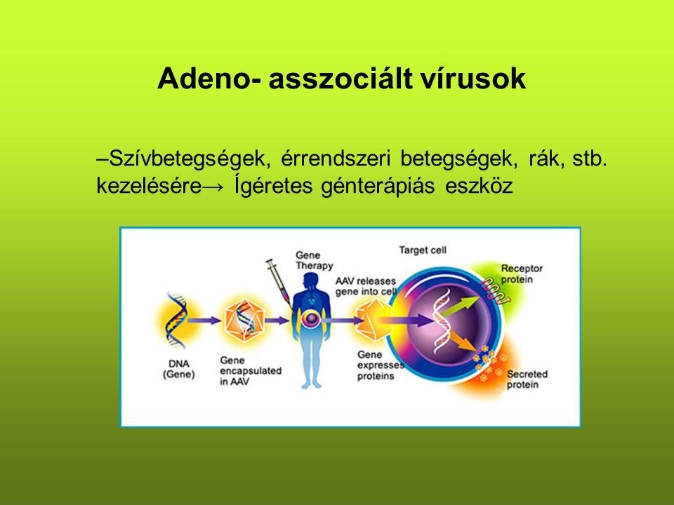 Adeno- asszociált vírusok –Szívbetegségek, érrendszeri betegségek, rák, stb.