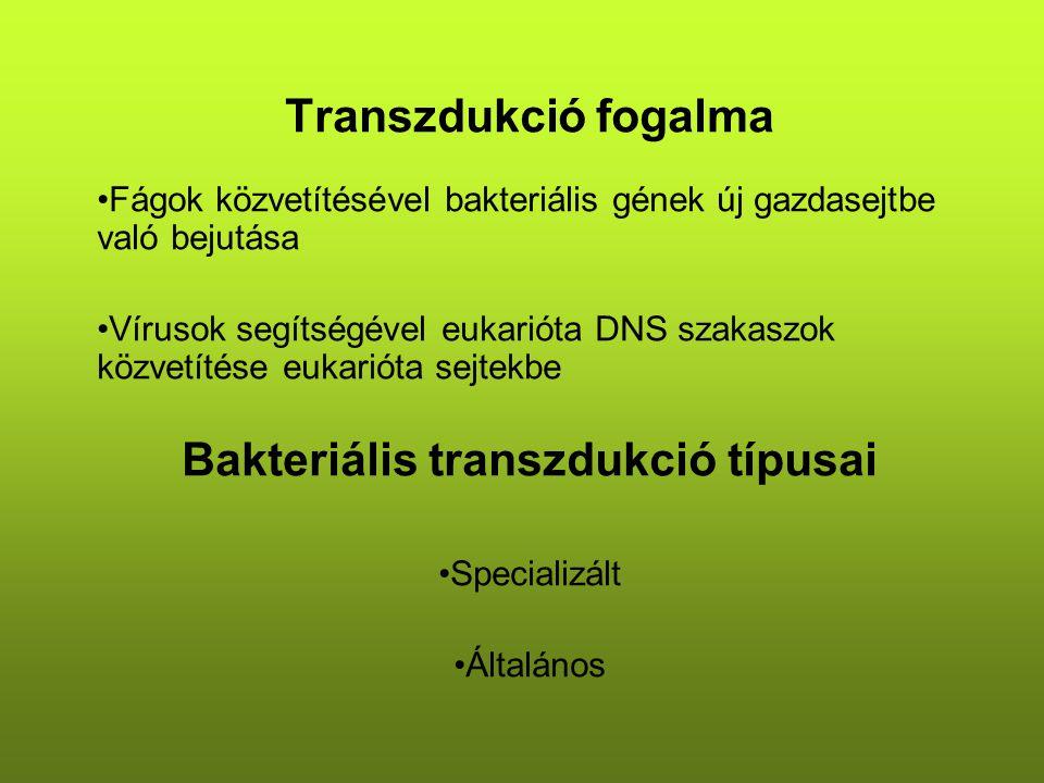 Transzdukció fogalma Fágok közvetítésével bakteriális gének új gazdasejtbe való bejutása Vírusok segítségével eukarióta DNS szakaszok közvetítése eukarióta sejtekbe Bakteriális transzdukció típusai Specializált Általános