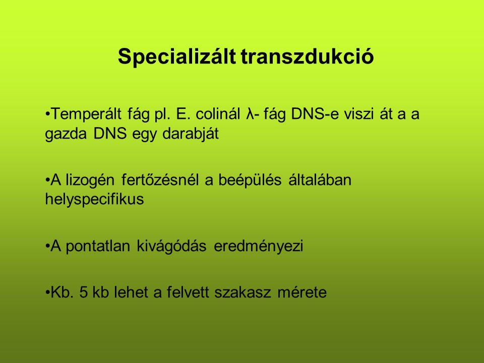 Specializált transzdukció Temperált fág pl. E.