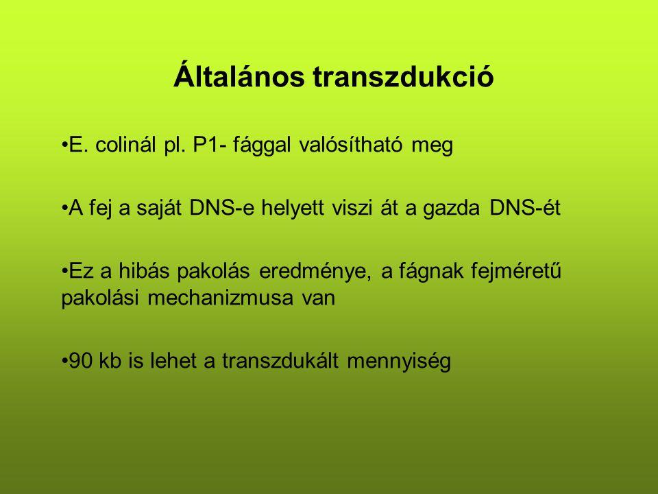 Általános transzdukció E. colinál pl.
