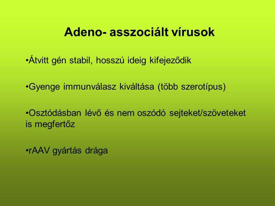 Adeno- asszociált vírusok Hibrid vektorokat is készítenek: –HSV1+AAV –Rep génes vektor+ITR határolta transzgén vektor Alkalmazás: genetikai/örökletes betegségek kezelése –Izomban: lacZ, β- galaktozidáz gén bevitele adenovírus jelenlétében/hiányában Öregség/betegség okozta izomtömeg csökkenés kezelése