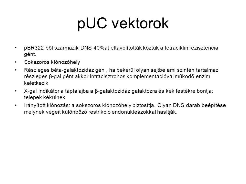 pUC vektorok pBR322-ből származik DNS 40%át eltávolították köztük a tetraciklin rezisztencia gént.