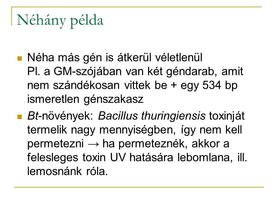Néhány példa Néha más gén is átkerül véletlenül Pl. a GM-szójában van két géndarab, amit nem szándékosan vittek be + egy 534 bp ismeretlen génszakasz
