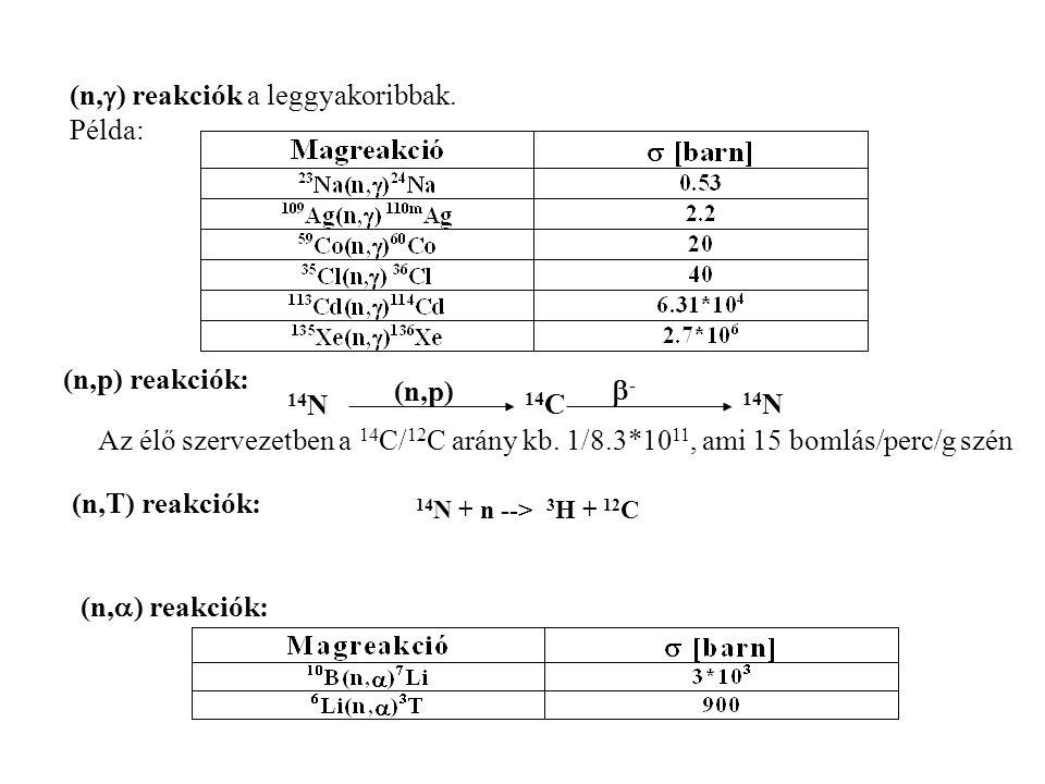(n,  ) reakciók a leggyakoribbak. Példa: (n,p) reakciók: 14 N (n,p) 14 N 14 C -- Az élő szervezetben a 14 C/ 12 C arány kb. 1/8.3*10 11, ami 15 bom