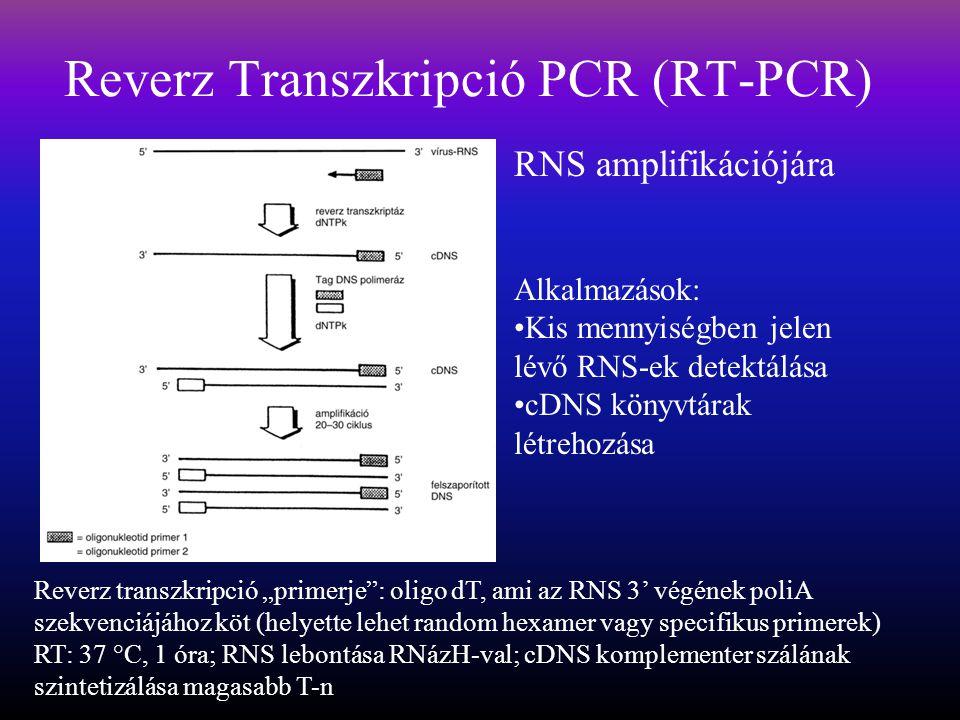 """Reverz Transzkripció PCR (RT-PCR) RNS amplifikációjára Reverz transzkripció """"primerje : oligo dT, ami az RNS 3' végének poliA szekvenciájához köt (helyette lehet random hexamer vagy specifikus primerek) RT: 37 °C, 1 óra; RNS lebontása RNázH-val; cDNS komplementer szálának szintetizálása magasabb T-n Alkalmazások: Kis mennyiségben jelen lévő RNS-ek detektálása cDNS könyvtárak létrehozása"""