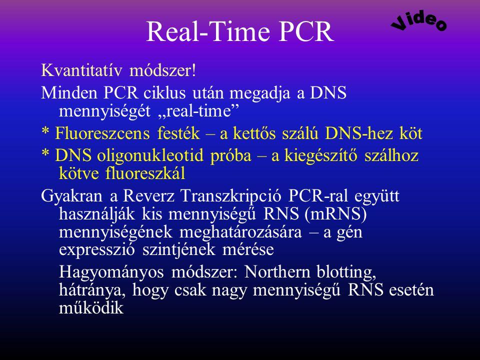 Real-Time PCR Kvantitatív módszer.