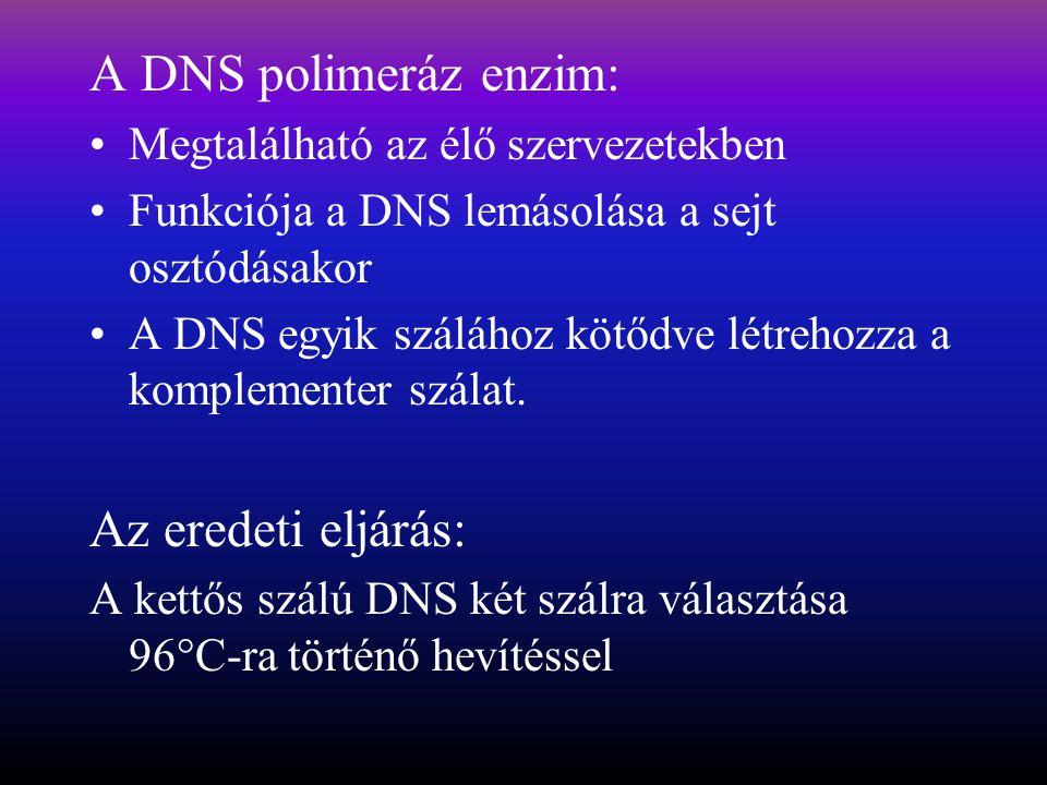A DNS polimeráz enzim: Megtalálható az élő szervezetekben Funkciója a DNS lemásolása a sejt osztódásakor A DNS egyik szálához kötődve létrehozza a komplementer szálat.