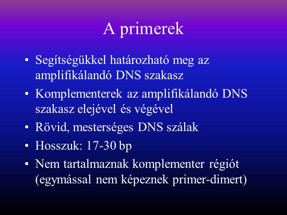 A primerek Segítségükkel határozható meg az amplifikálandó DNS szakasz Komplementerek az amplifikálandó DNS szakasz elejével és végével Rövid, mesterséges DNS szálak Hosszuk: 17-30 bp Nem tartalmaznak komplementer régiót (egymással nem képeznek primer-dimert)