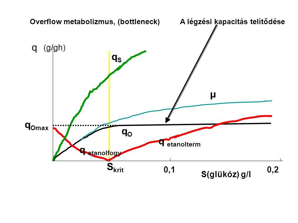 Overflow metabolizmus, (bottleneck) 0,2 S(glükóz) g/l qSqS μ q etanolterm S krit q Omax qOqO q etanolfogy q (g/gh) 0,1 A légzési kapacitás telítődése