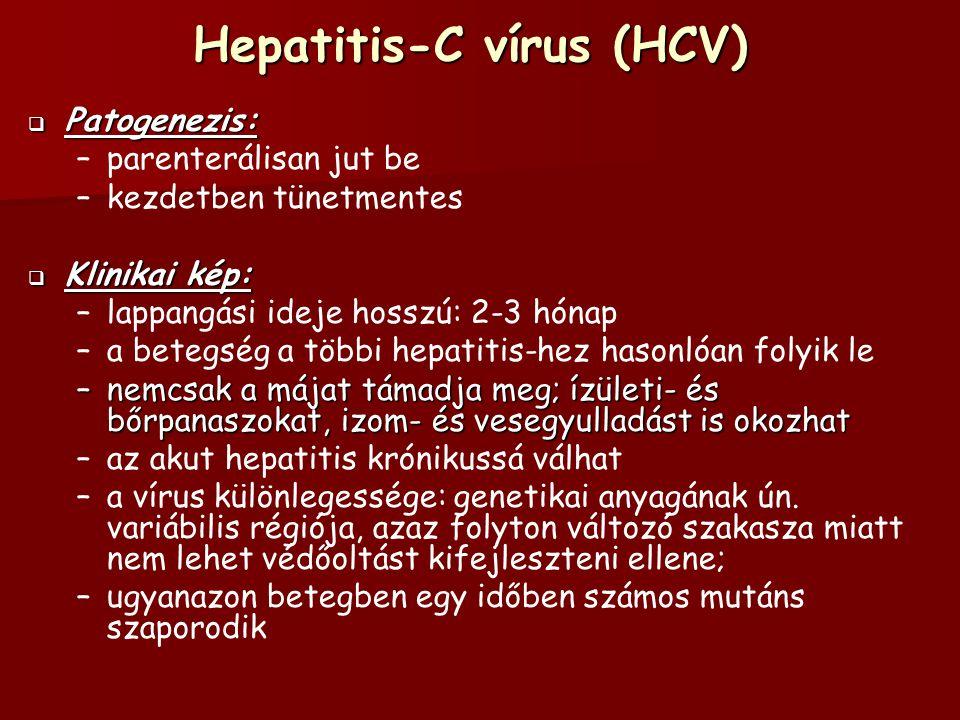 Hepatitis-C vírus (HCV)  Patogenezis: – –parenterálisan jut be – –kezdetben tünetmentes  Klinikai kép: – –lappangási ideje hosszú: 2-3 hónap – –a betegség a többi hepatitis-hez hasonlóan folyik le –nemcsak a májat támadja meg; ízületi- és bőrpanaszokat, izom- és vesegyulladást is okozhat – –az akut hepatitis krónikussá válhat – –a vírus különlegessége: genetikai anyagának ún.