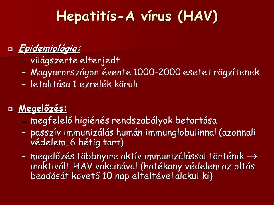 Hepatitis-A vírus (HAV)  Epidemiológia: – – világszerte elterjedt – –Magyarországon évente 1000-2000 esetet rögzítenek – –letalitása 1 ezrelék körüli  Megelőzés: – megfelelő betartása – megfelelő higiénés rendszabályok betartása –passzív immunizálás humán immunglobulinnal (azonnali védelem, 6 hétig tart) –megelőzés többnyire aktív immunizálással történik  inaktivált HAV vakcinával (hatékony védelem az oltás beadását követő 10 nap elteltével alakul ki)