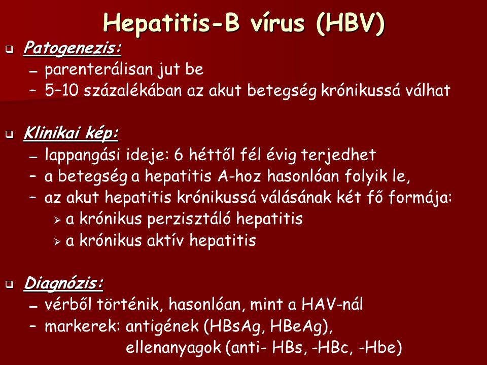 Hepatitis-B vírus (HBV)  Patogenezis: – – parenterálisan jut be – –5–10 százalékában az akut betegség krónikussá válhat  Klinikai kép: – – lappangási ideje: 6 héttől fél évig terjedhet – –a betegség a hepatitis A-hoz hasonlóan folyik le, – –az akut hepatitis krónikussá válásának két fő formája:   a krónikus perzisztáló hepatitis   a krónikus aktív hepatitis  Diagnózis: – – vérből történik, hasonlóan, mint a HAV-nál – –markerek: antigének (HBsAg, HBeAg), ellenanyagok (anti- HBs, -HBc, -Hbe)