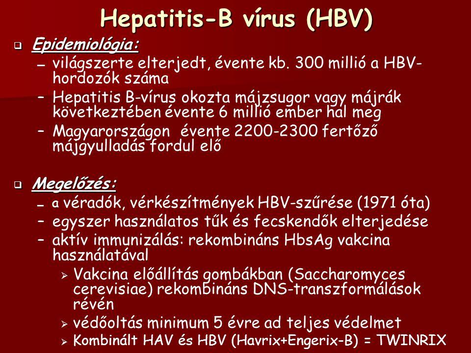 Hepatitis-B vírus (HBV)  Epidemiológia: – – világszerte elterjedt, évente kb.