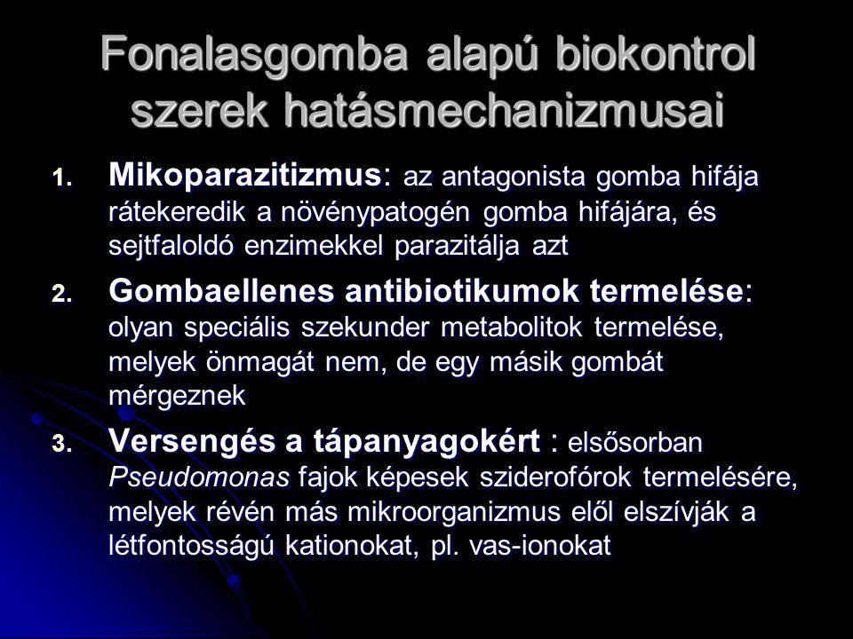 Fonalasgomba alapú biokontrol szerek hatásmechanizmusai 1. Mikoparazitizmus: az antagonista gomba hifája rátekeredik a növénypatogén gomba hifájára, é