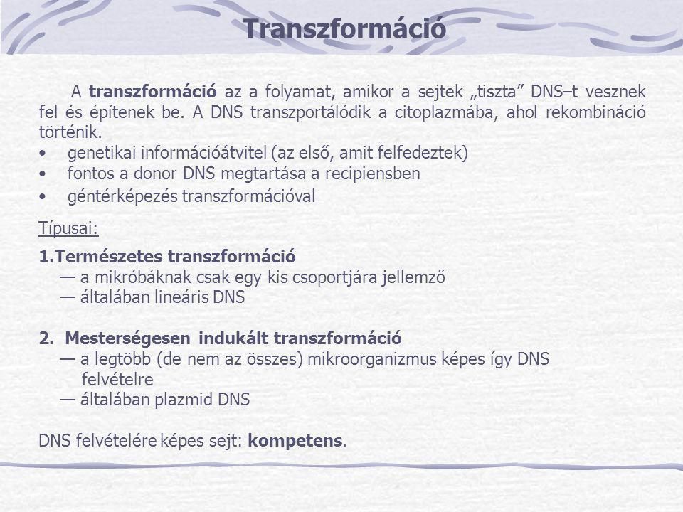 """Transzformáció A transzformáció az a folyamat, amikor a sejtek """"tiszta"""" DNS–t vesznek fel és építenek be. A DNS transzportálódik a citoplazmába, ahol"""