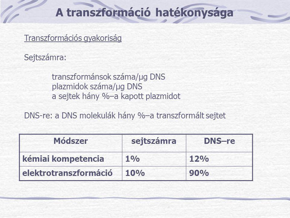 A transzformáció hatékonysága Transzformációs gyakoriság Sejtszámra: transzformánsok száma/μg DNS plazmidok száma/μg DNS a sejtek hány %–a kapott plaz