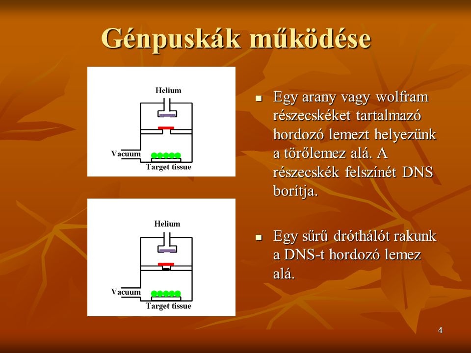 4 Génpuskák működése Egy arany vagy wolfram részecskéket tartalmazó hordozó lemezt helyezünk a törőlemez alá.