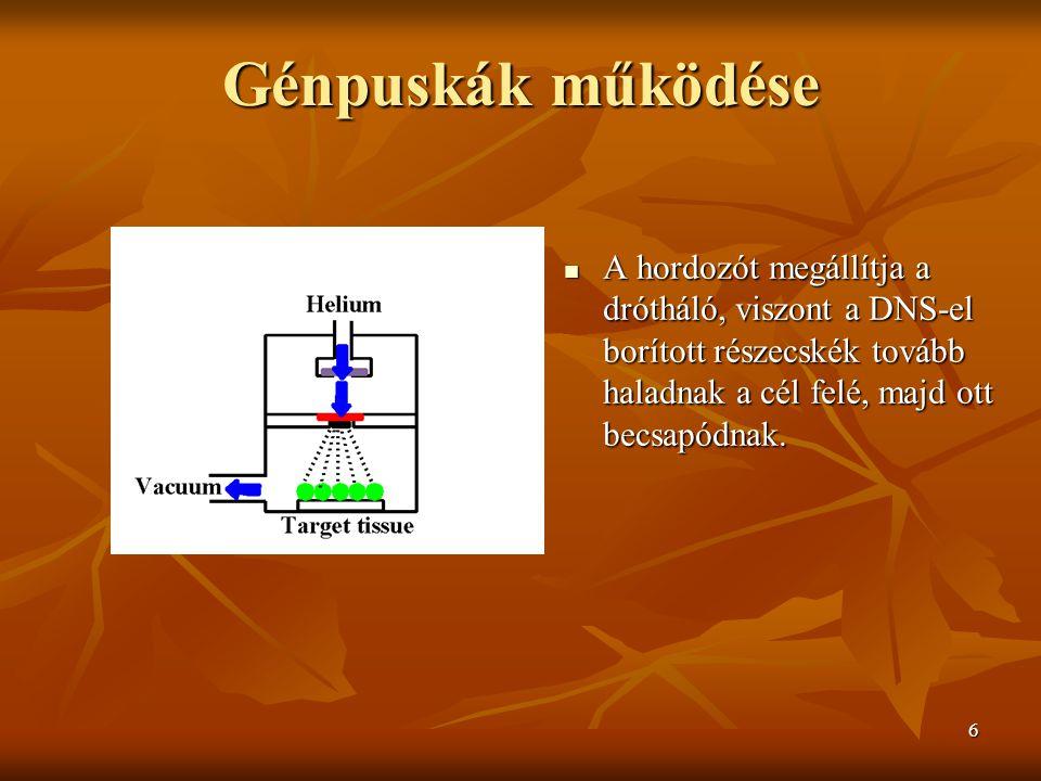 6 Génpuskák működése A hordozót megállítja a drótháló, viszont a DNS-el borított részecskék tovább haladnak a cél felé, majd ott becsapódnak.