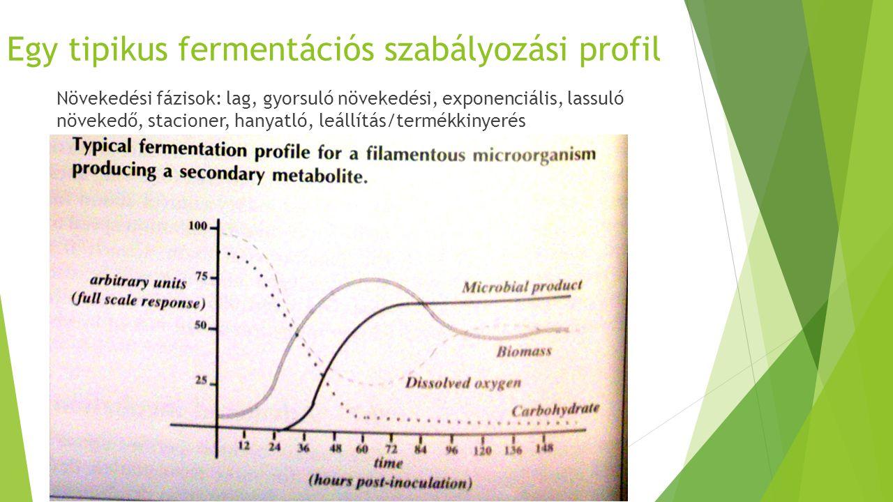 Egy tipikus fermentációs szabályozási profil Növekedési fázisok: lag, gyorsuló növekedési, exponenciális, lassuló növekedő, stacioner, hanyatló, leáll