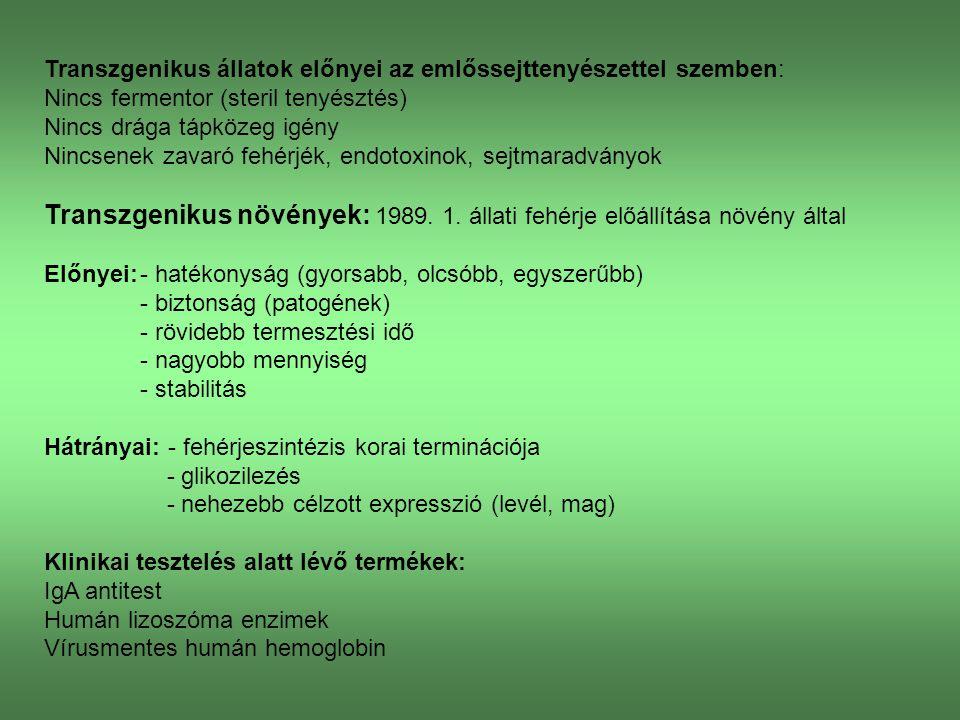 Tejbe kiválasztott transzgenikus termékek: α-glükozidáz: glikogén glükózzá alakítása izmokban enzim hiánya: izomsorvadás előállítás: transzgenikus nyúl anti-thrombin III: véralvadás szabályozása felhasználás: vérrög kezelése előállítás: transzgenikus kecske Húgyhólyag mint bioreaktor (kiválasztás vizeletbe): Hím és nőstény állat is, egész életük során képesek expresszióra.