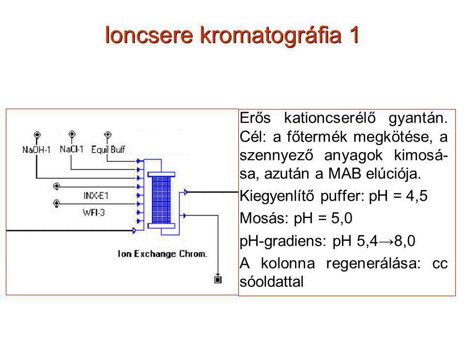 Ioncsere kromatográfia 1 Erős kationcserélő gyantán. Cél: a főtermék megkötése, a szennyező anyagok kimosá- sa, azután a MAB elúciója. Kiegyenlítő puf