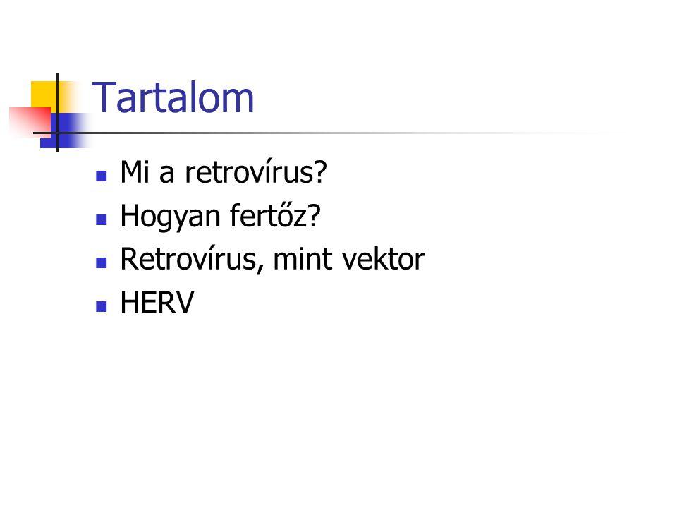 Tartalom Mi a retrovírus? Hogyan fertőz? Retrovírus, mint vektor HERV