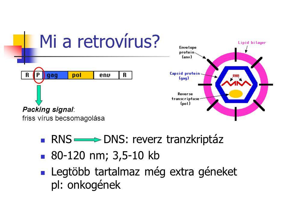 Mi a retrovírus? RNS DNS: reverz tranzkriptáz 80-120 nm; 3,5-10 kb Legtöbb tartalmaz még extra géneket pl: onkogének Packing signal: friss vírus becso